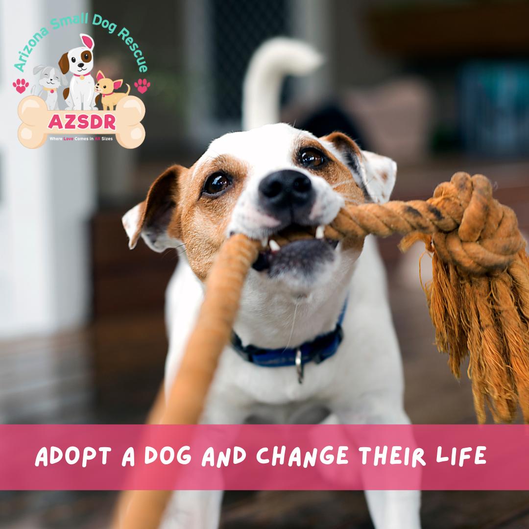 Dog Adoption in Phoenix, AZ