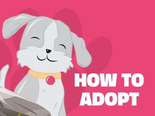 Dog Adoption in Phoenix, Arizona
