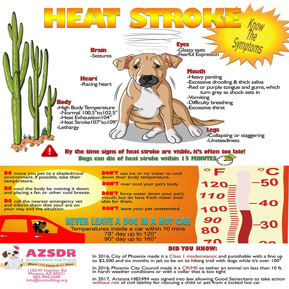 Dog Summer Safety in Phoenix, AZ